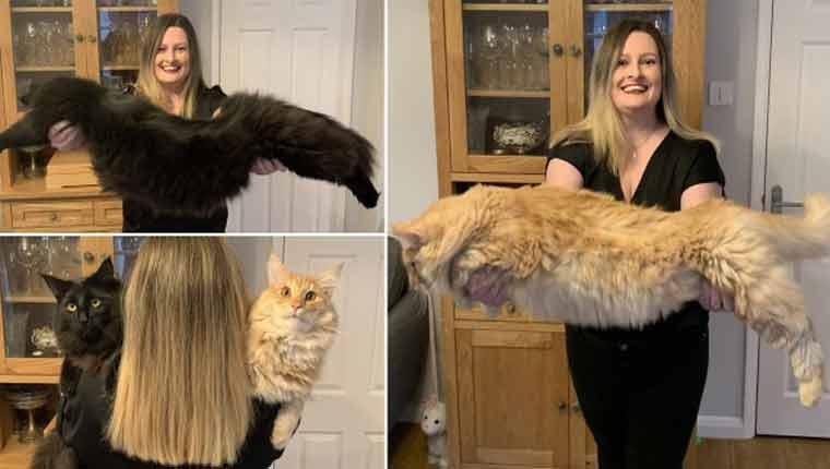 Mulher posa com gatinhos gigantes e as pessoas acham que é Photoshop