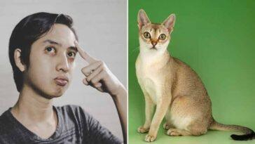 Qual-é-a-menor-raça-de-gato-do-mundo