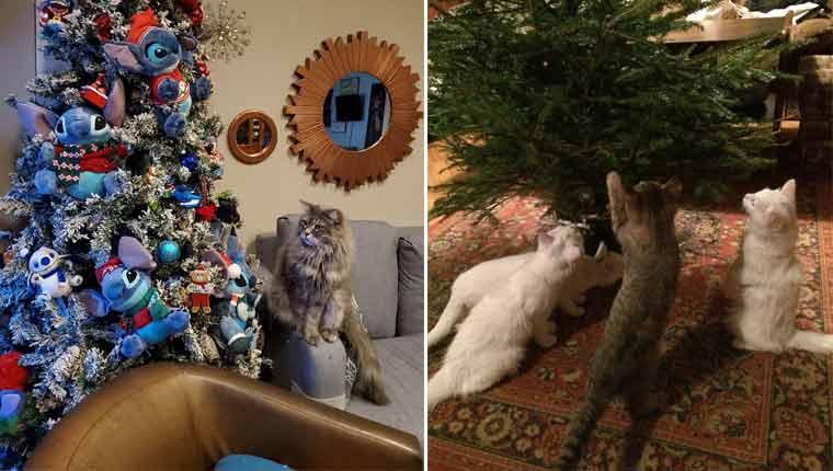 Gatinhos no Natal e as fotos mais divertidas desses bichanos bagunceiros