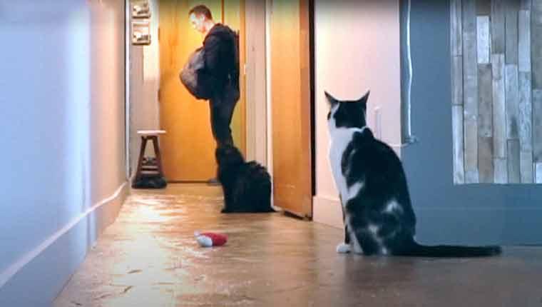 Câmera mostra reação de gatinho quando dono sai: de partir o coração