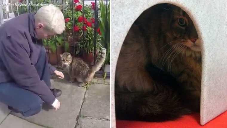 Gatinha passa dias no frio congelante da rua esperando dono falecido