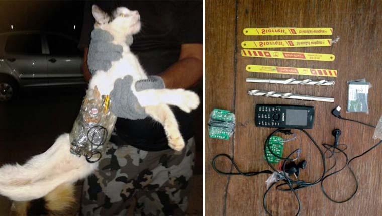 Gatinho foi detido tentando entrar com celulares e brocas em presídio