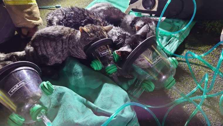 Gatinhos precisam de máscaras de oxigênio após resgate em incêndio
