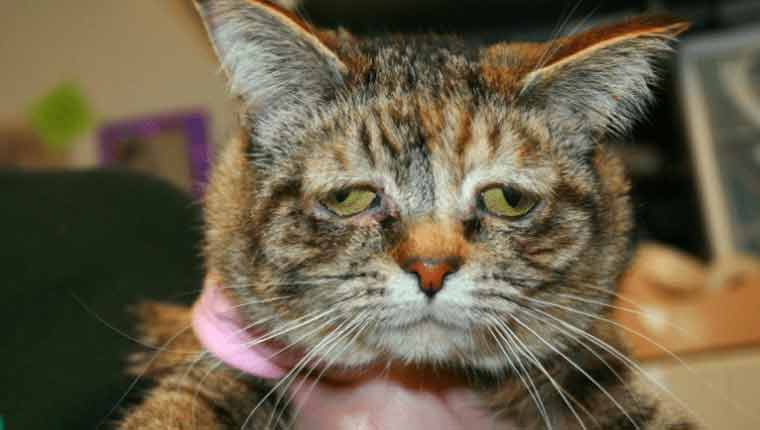 Gato de rua mais triste do mundo encontra um lar após ficar famoso