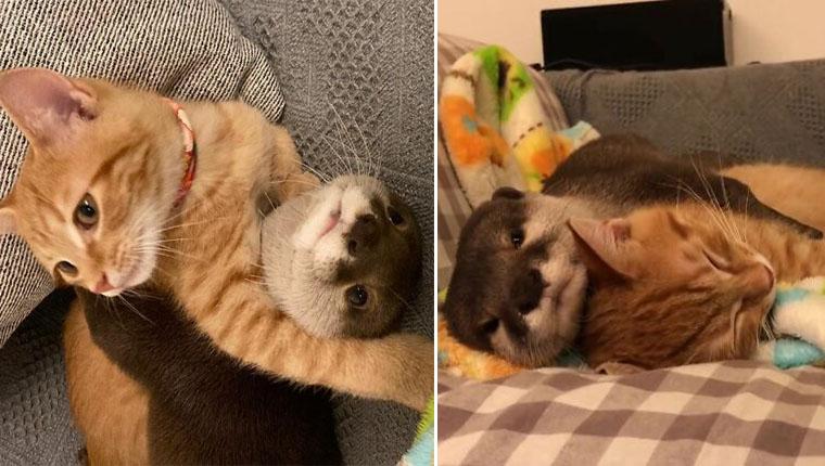 Lontra abraça gatinho na hora de dormir e amizade entre eles viraliza