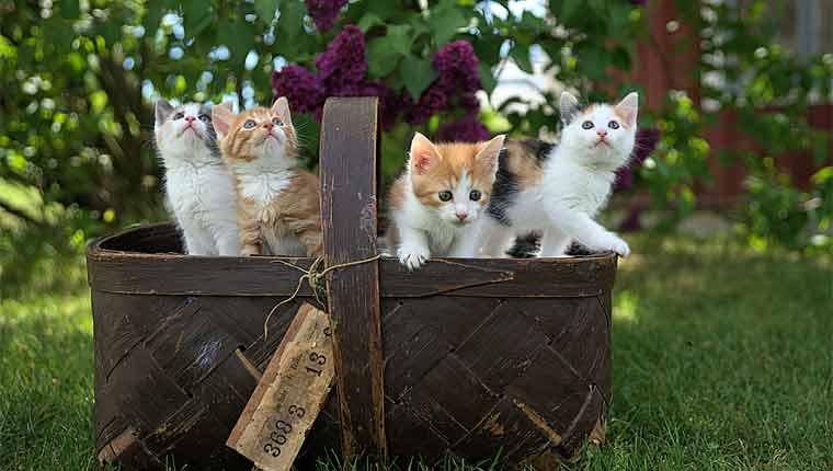 Nomes de gato mais populares em 2020: Confira a lista dos mais usados