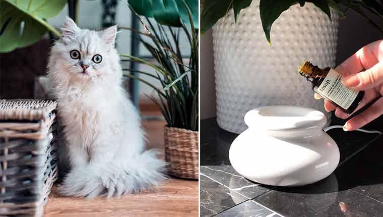 Óleos essenciais e difusores de aroma são perigosos para seus gatos
