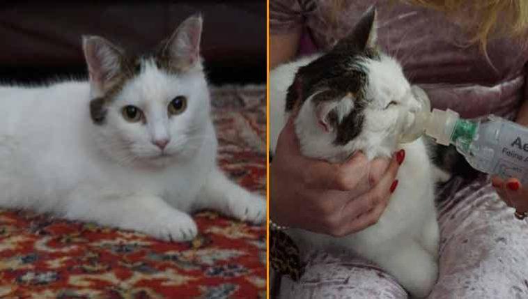 gata-asmática-encontra-lar