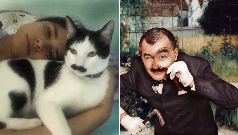Gato com bigode perfeito é como um detetive da ficção