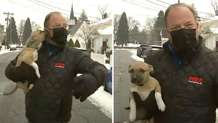 Cachorrinho aleatório invade reportagem ao vivo e encanta a todos