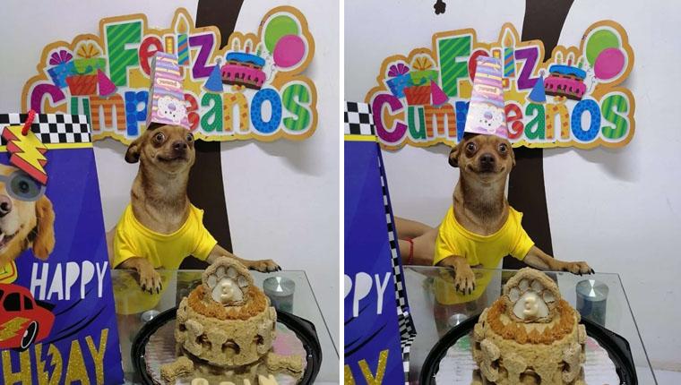 Cachorrinho não contémalegria ao ver que lembraram do aniversário dele