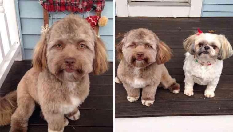 Cachorro com estranho rosto humano