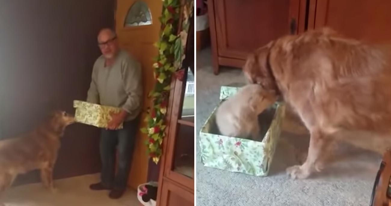Cachorro de luto recebe o melhor presente que poderia querer