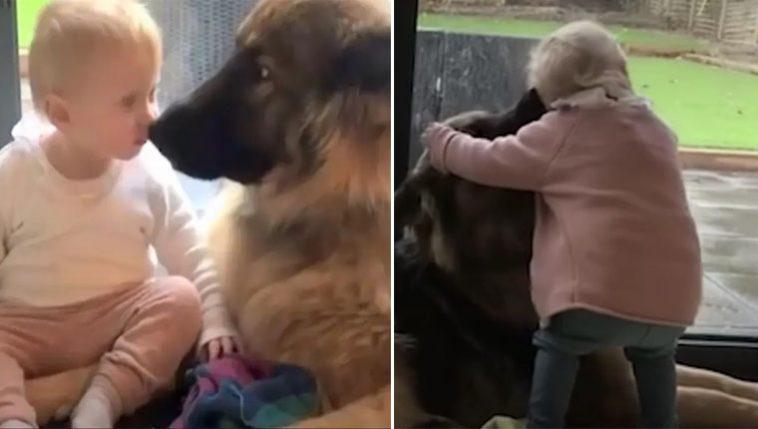 Cachorro grande se torna