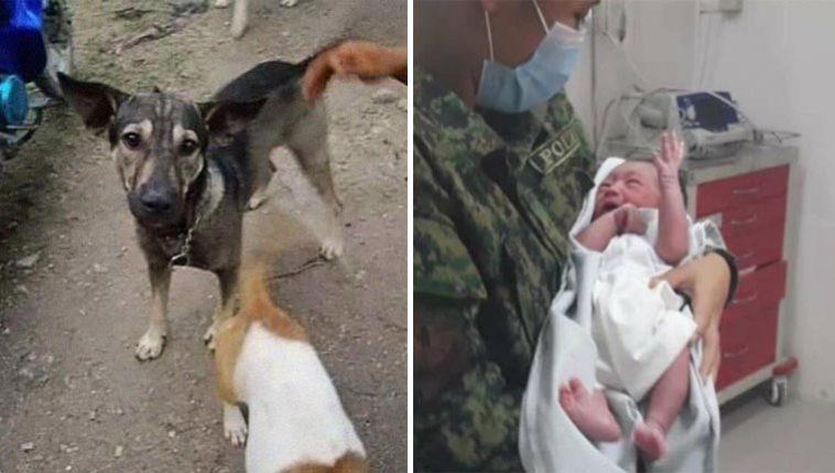 Cachorro leva desconhecido bebê