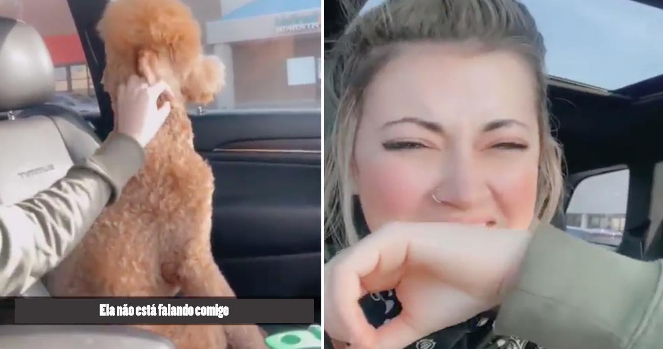 Cachorro vira as costas à dona após ficar decepcionado com tosa ridícula