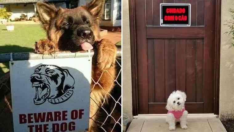 Cachorros nada perigosos atrás de placas que dizem o contrário