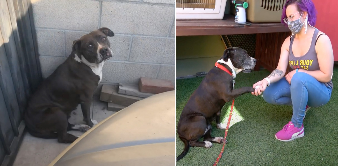 Cadela idosa com câncer foi resgatada das ruas e salva de um destino terrível