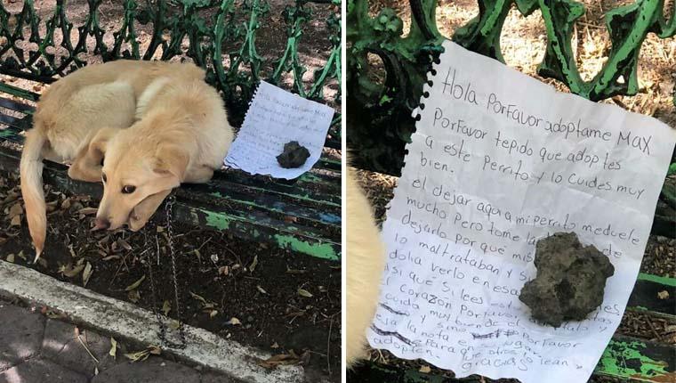 Criança deixa cachorro em banco de praça com bilhete triste explicando tudo