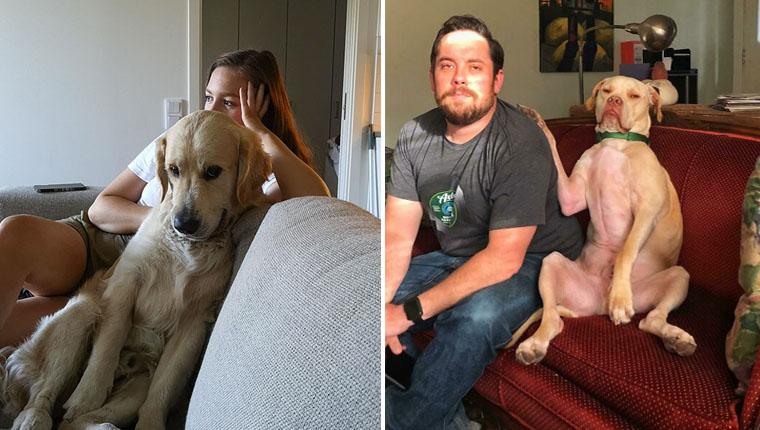 Esses cachorros roubaram namorados e namoradas e sabem disso