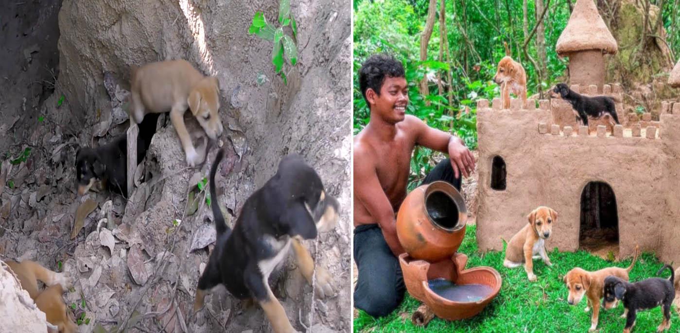 Homem resgatou cachorrinhos na floresta e fez um castelo para eles