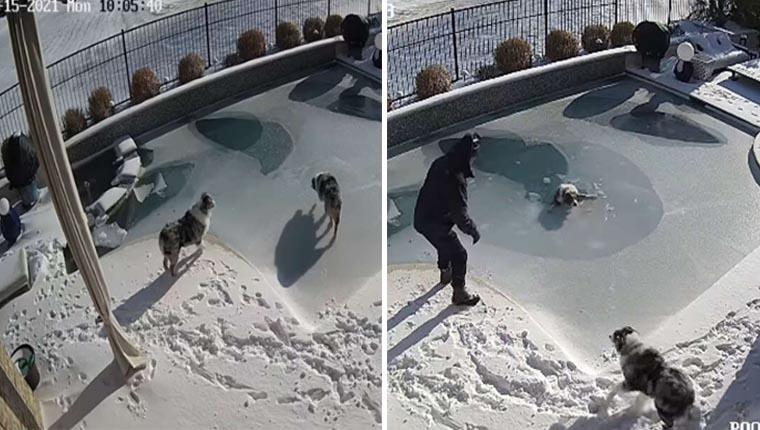 Homem se arrisca em piscina congelada para salvar cachorro