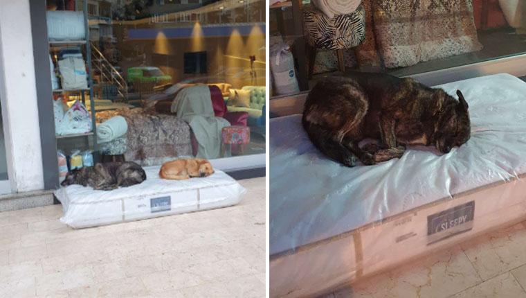 Loja de móveis disponibiliza colchões para cães de rua no frio