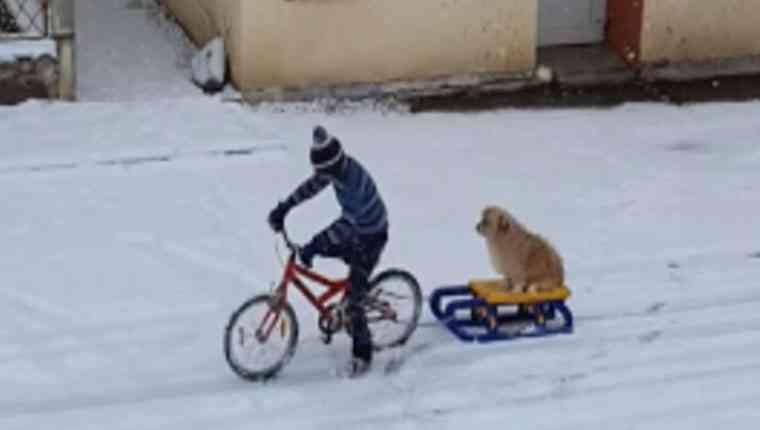 Menino leva cachorro para passear de trenó e vídeo viraliza