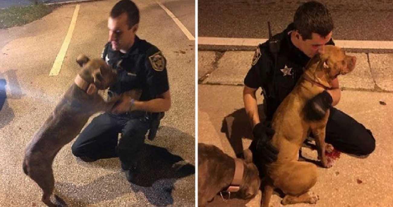 Policiais consolam pitbullsabandonados enquanto esperam ajuda