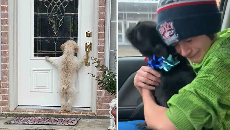 Imagens emocionantes mostram cachorros perdidos voltando para casa
