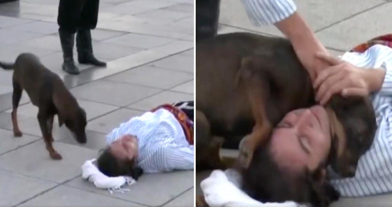 Ator se deita no chão em apresentação e é consolado por cachorro de rua