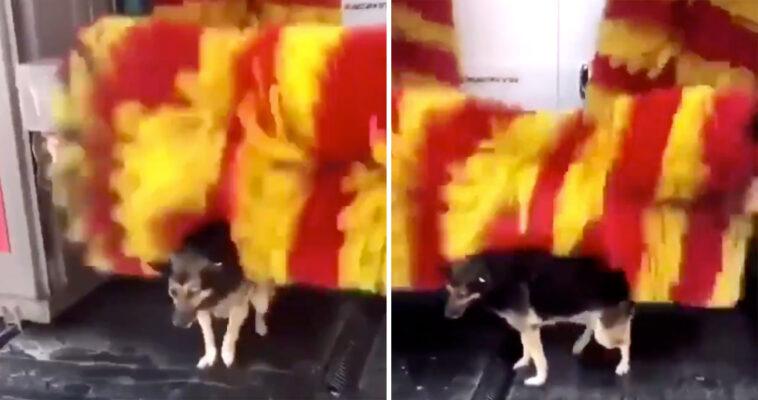 Cachorro de rua visita lava jato