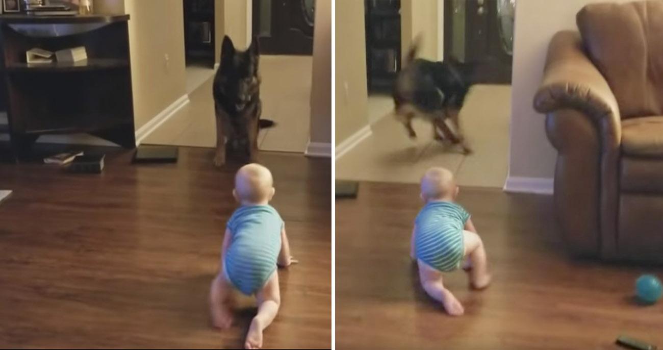 Cachorro e bebê se revezam em perseguição fofa pela casa