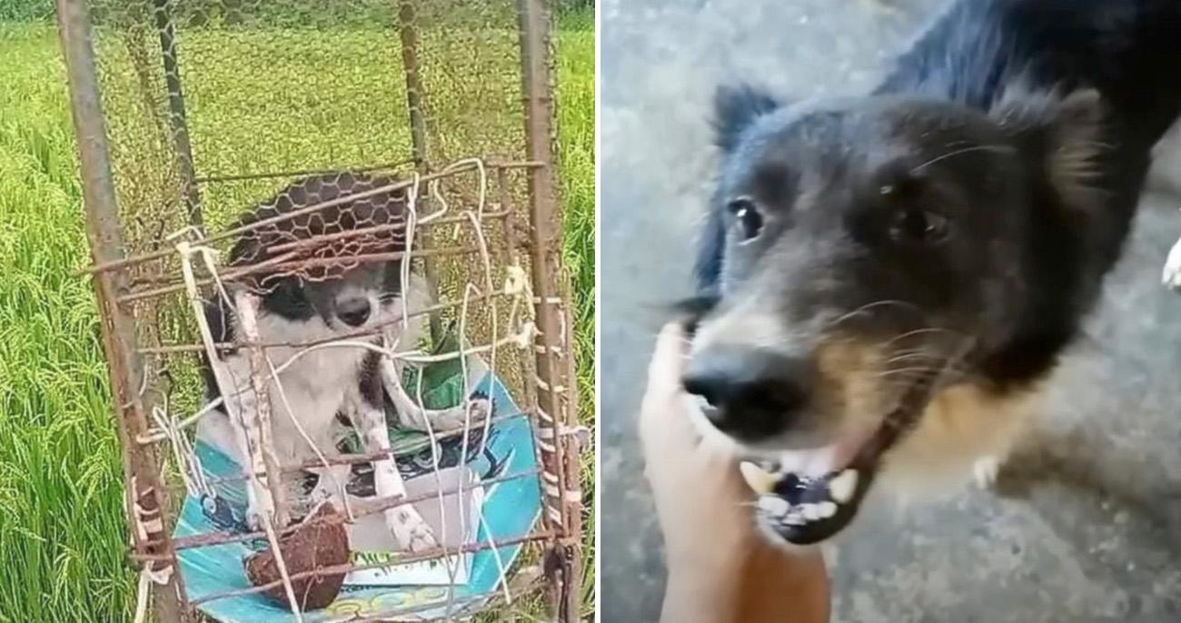 Cachorro era mantido preso em gaiola no campo como espantalho vivo