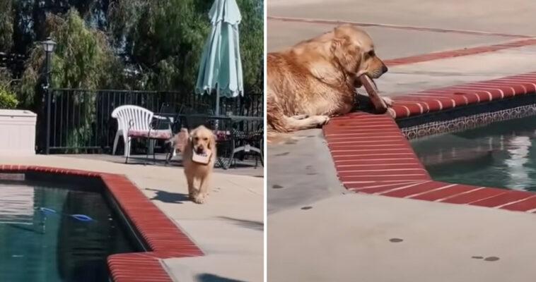 Cachorro joga brinquedos piscina