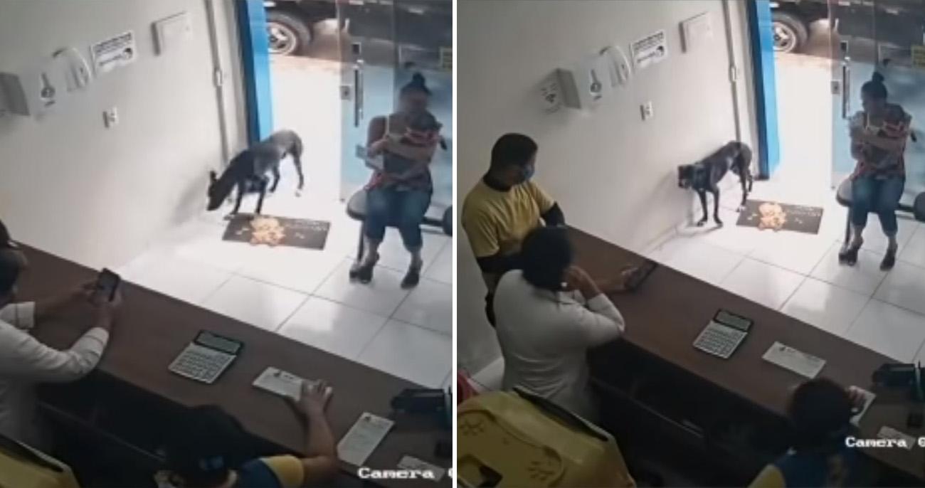 Cachorro perdido ferido entrou em clínica veterinária e mostrou a pata