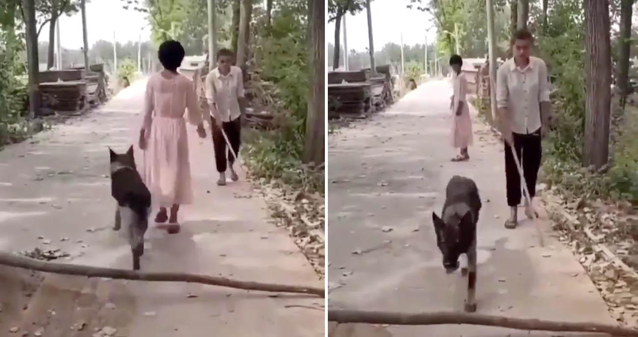 Cachorro remove galho do caminho de homem cego