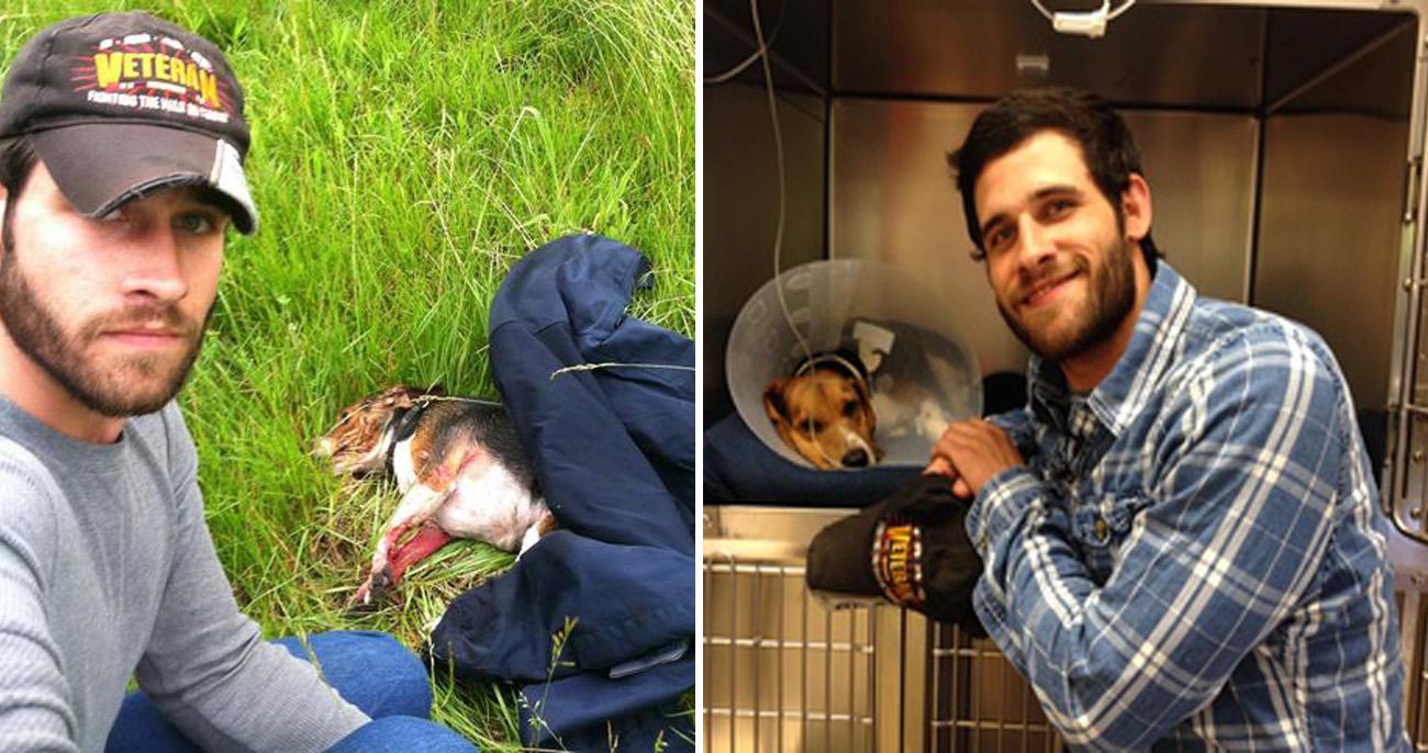 Cão atropelado e deixado para morrer foi salvo por veterano de guerra