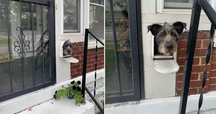 Cãozinho esperto usa