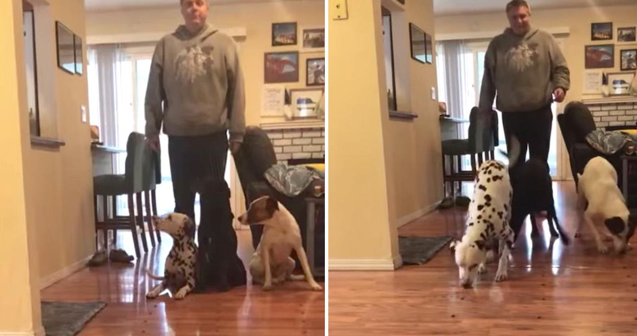 Dálmata vence corrida de biscoitos e volta para ajudar os outros cães