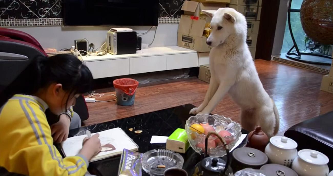 Dono ensinou o cachorro a supervisionar dever de casa da filha