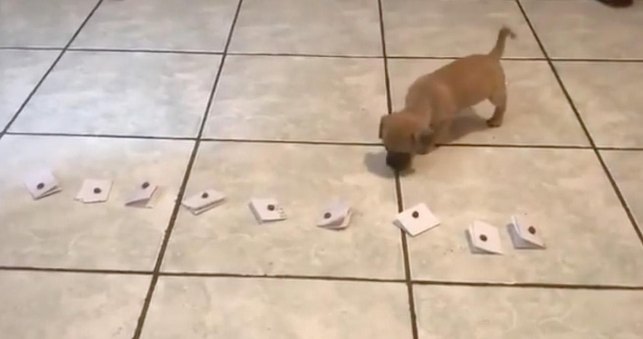 Família deixou cachorrinho escolher o próprio nome em um jogo divertido