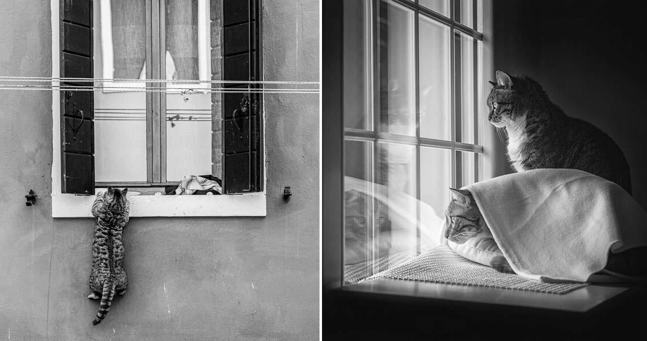 Fotos artísticas incríveis de gatinhos na janela que vão te inspirar