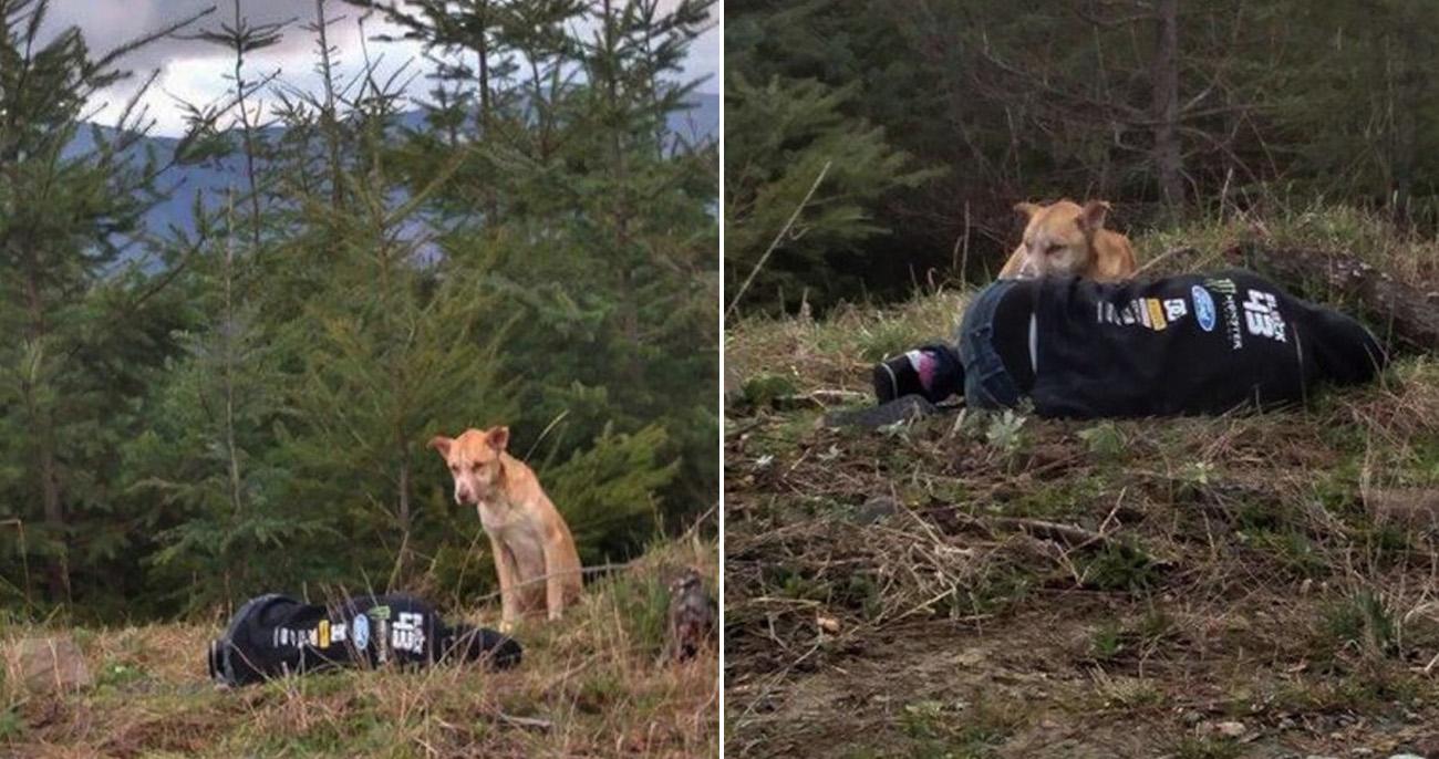 Garota se finge de morta para atrair cachorro perdido e o resgatar na floresta