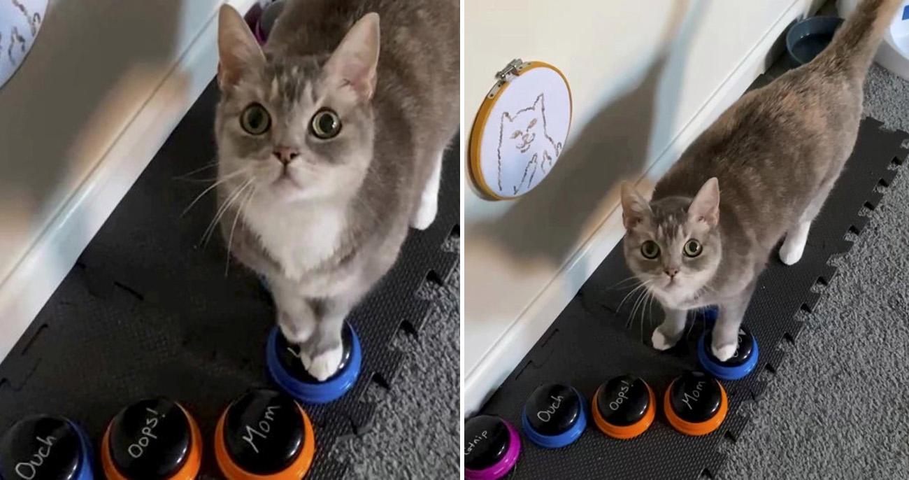 Gatinha aprende a usar botões para se comunicar com a dona