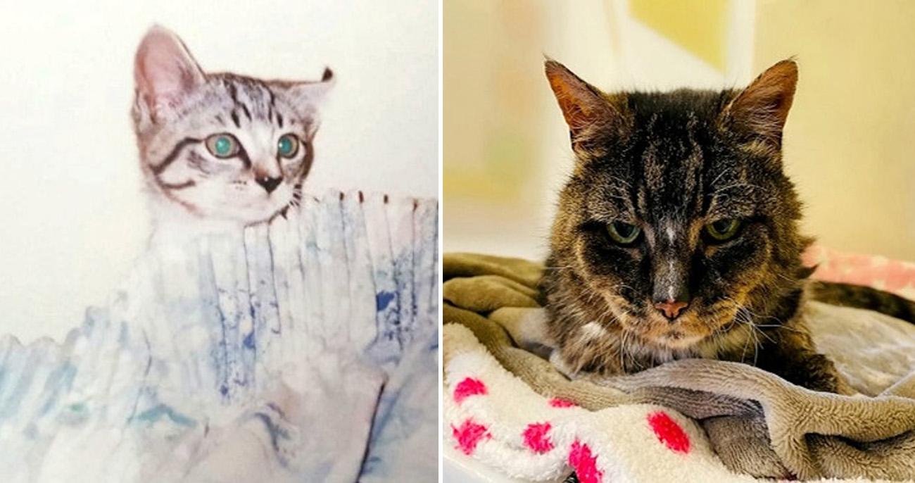 Gatinha perdida por 20 anos reencontrou donadois diasantes de morrer