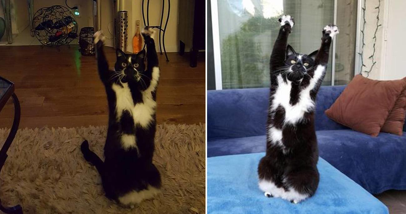 Gatinho joga os braços para o alto sempre que vê humanos e exige abraços