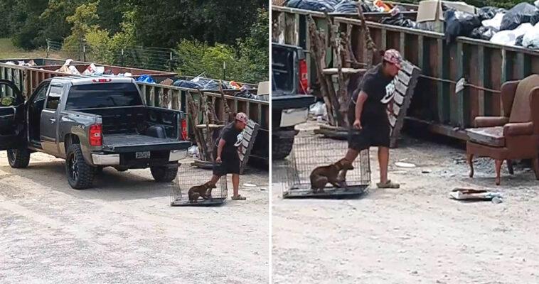 Mulher arrasta cachorro