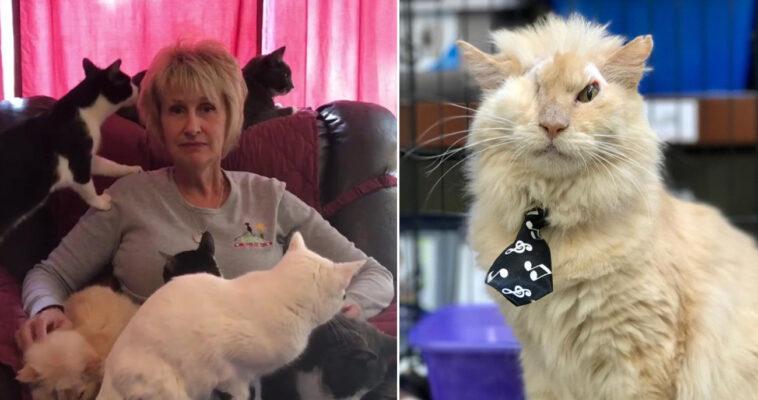 Mulher dá a gatos doentes morrer