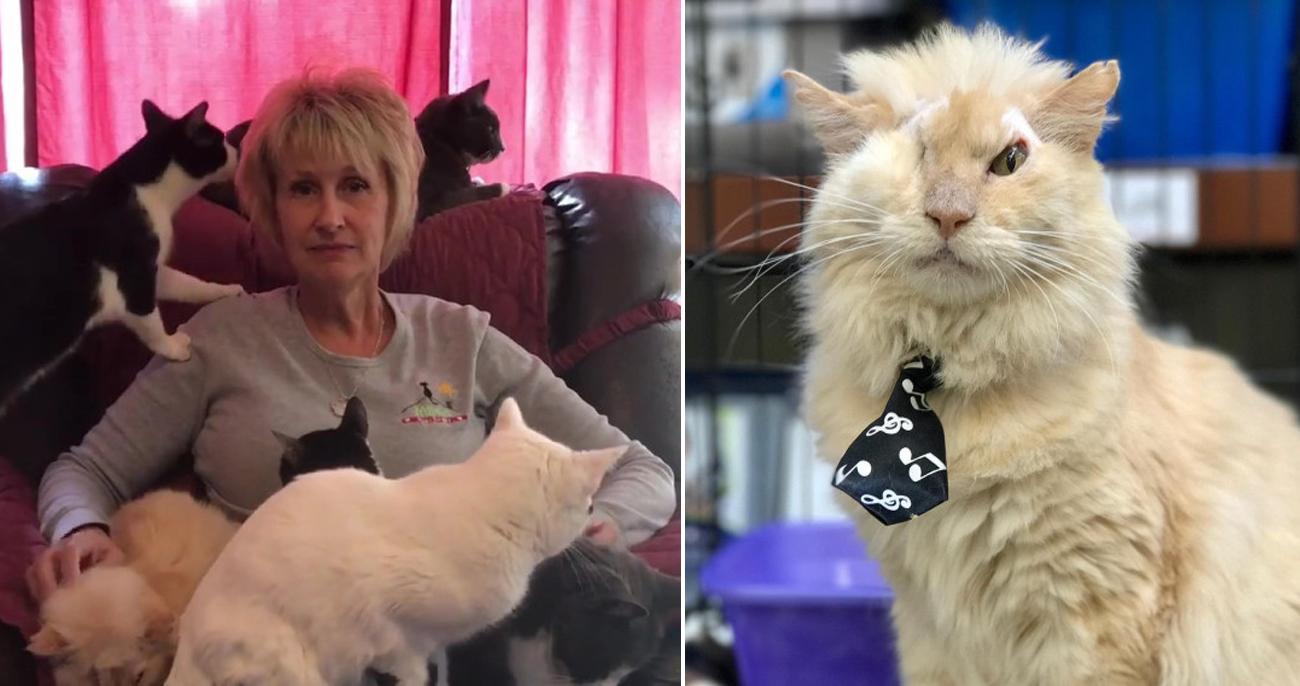 Mulher dá a gatos doentes um lar amoroso para morrerem em paz